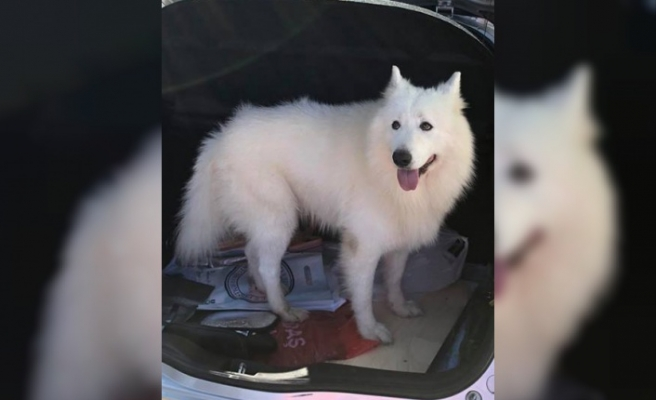 Bakan Çeler'in köpeği bulundu