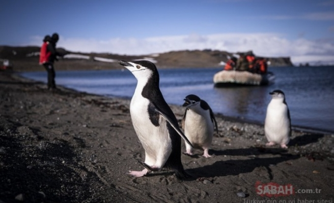 Tarihi anlar! Türk bilim insanları Antarktika'ya ayak bastı...