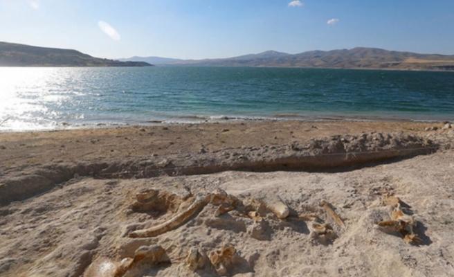 Kayseri'de 7.5 milyon yıllık yeni fosiller bulundu ©