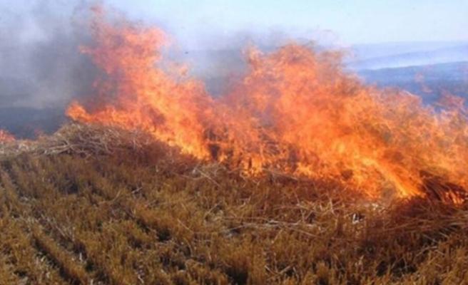 İzinsiz ve tedbirsiz ateş yaktı, kuru otlar ve zeytin ağacına zarar verdi