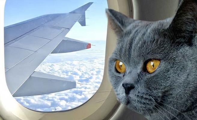 Kedinin pilotlara saldırıp 'kaçırdığı' uçak acil iniş yaptı