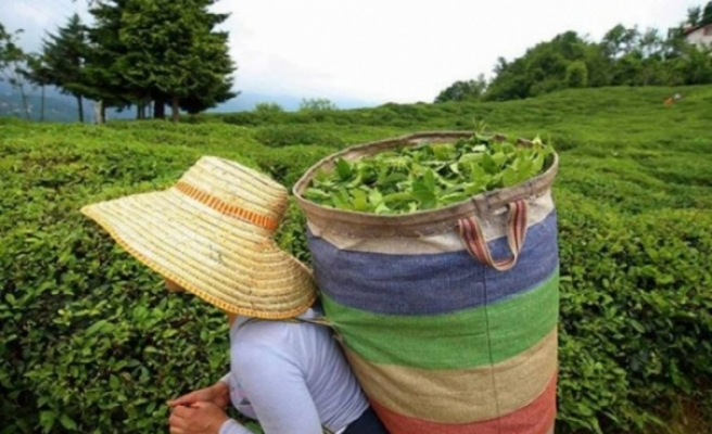 KKTC, Türkiye'den en çok çay ithal eden ülkeler arasında