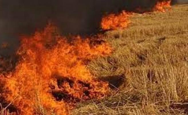 170 rulo balyanın yandığı yandığı yangının nedeni ortaya çıktı: Kundaklama