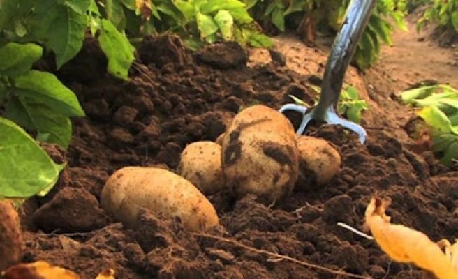 İlkbahar patates ekim arazisi beyanında yarın son gün