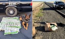 ABD'de Polis Kovalamacası Sırasında Yol Kenarına 900 Bin Dolardan Fazla Para Atıldı