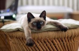 İnsanların evde kalmasından en çok kediler rahatsız