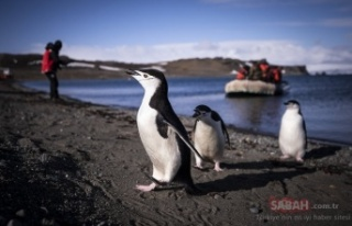 Tarihi anlar! Türk bilim insanları Antarktika'ya...