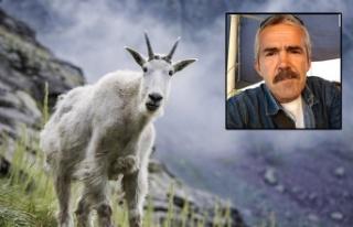 Yabani keçi avlarken uçurumdan düşüp öldü