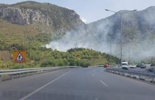 Girne-Lefkoşa Anayolu'nun Ciklos mevkiinde ormanlık...