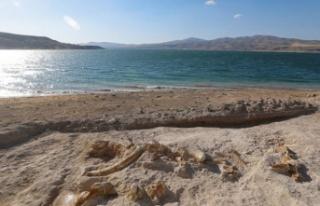 Kayseri'de 7.5 milyon yıllık yeni fosiller...