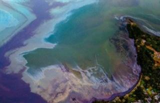 Mauritius'da petrol sızıntısı: Halk saçlarını...