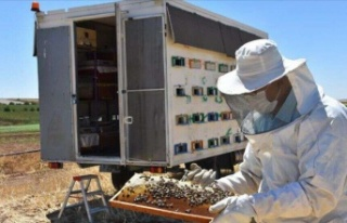Kaporta ustası tasarladığı konteynerle arılarını...