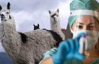 Virüsü Etkisi Hale Getirdi