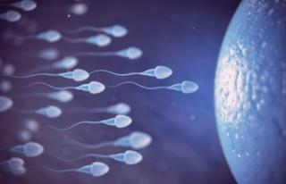 Sperm Sayısı ve Kalitesi Nasıl Arttırılır?