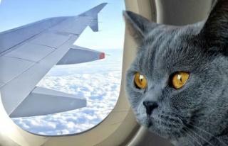 Kedinin pilotlara saldırıp 'kaçırdığı'...