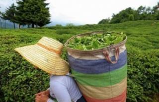 KKTC, Türkiye'den en çok çay ithal eden ülkeler...