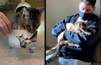 Kedisine taktırdığı mikroçip, 15 yıllık hasreti bitirdi