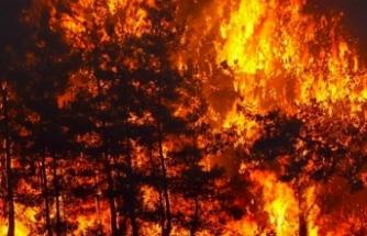 Orman yangını çıkarmak isteyen 2 terörist yakalandı