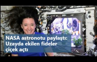 Uzaydaki biber fideleri çiçek açtı