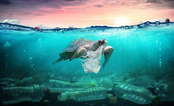 Plastik kirliliği Akdeniz'de kimyasal düzeylere ulaştı: Caretta carettalar ölüyor
